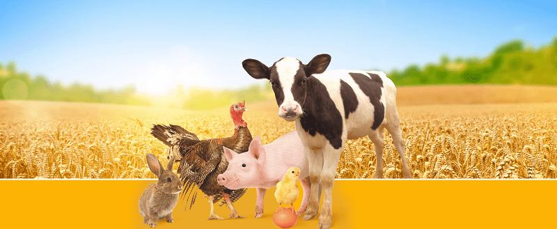 Составление рациона кормления, составление рациона кормления животных