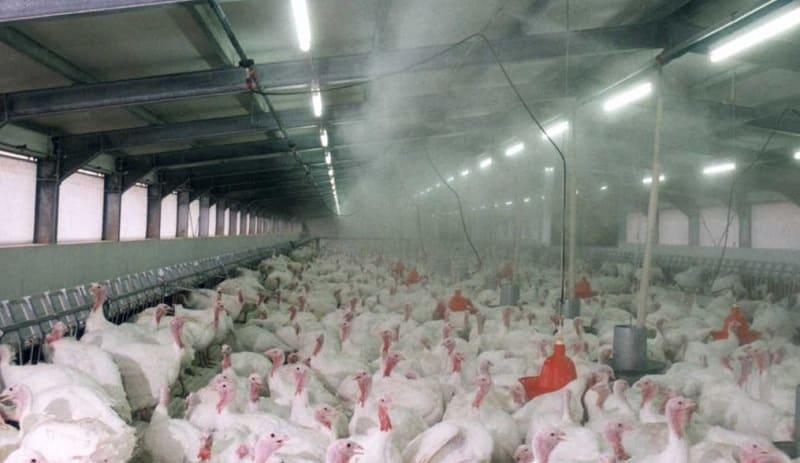 туман в птицеводстве